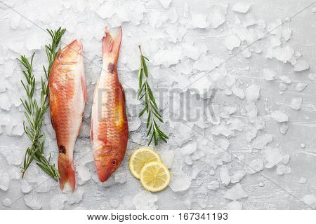 Fresh red mullet fish with lemon and rosemary on icy stone background