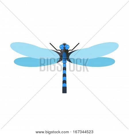 Cartoon flat blue dragonfly. Summer beautiful fragility damselfly. Anax imperator male emperor with big eyes nature insect animal wildlife vector illustration.