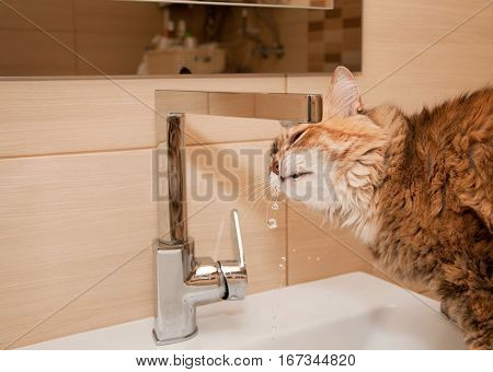 Cat Drinking Water In The Bathroom