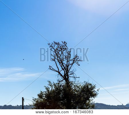 tree with large group of birds flying around in silhouette