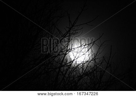 The moon lightning up the treetop so lovely
