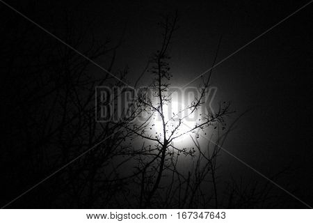 The moon lightning the treetop so beautiful