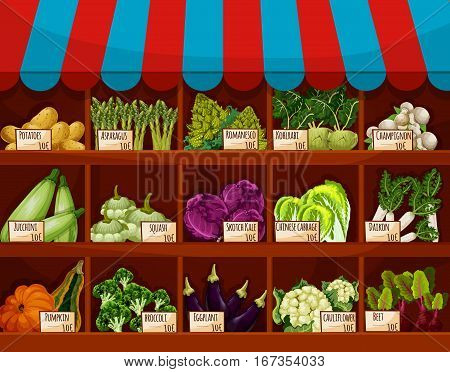 Food market store with vegetable showcase. Shop with potato and asparagus, romanesco and kohlrabi, champignon or portobello, white mushroom, zucchini and squash, scotch kale and daikon, cabbage. For agriculture and stall, counter sale theme