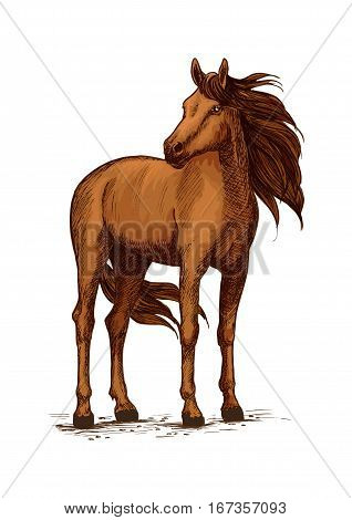 Stand of horse stallion or broodmare sketch. Mustang or domestic chestnut mammal, wild purebred animal with wavy mane and long tail, powerful hoof. Thoroughbred american racehorse symbol, equestrian hippodrome or stable, equine sport