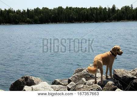 The dog standing on stones of river's shore