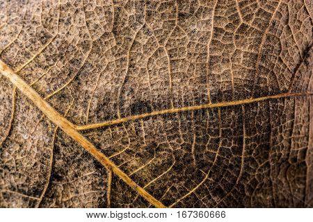 Macro View Of A Dry Leaf Of  Autumn Season