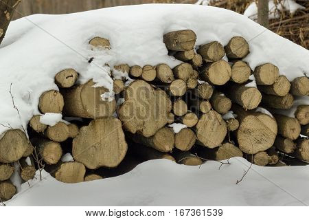 pile of logs in the forest. logs under snow. stacked logs