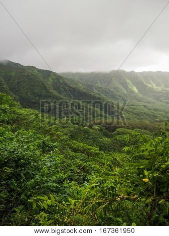 The lush green Manoa Valley located on Oahu in Hawaii was a filming location for Jurassic Park.