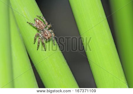 Spider on grass in the garden and cute