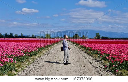 Man standing on the road among tulip fields in bloom. Mount Vernon Tulip Festival. Seattle. Washington. United States.