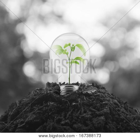 Light bulb with small green leaf plant inside on pile of soil over blur tree Eco energy concept