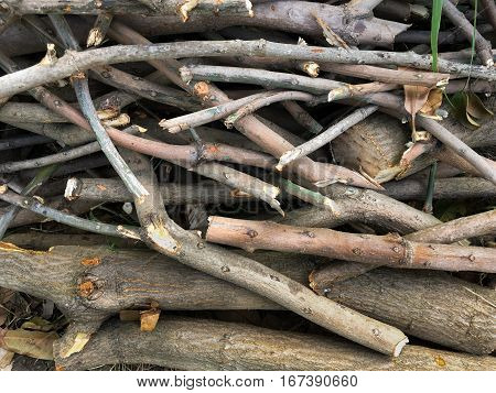 close up deforested cut tree wood in forest