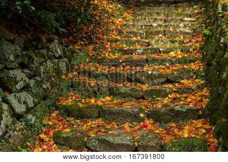 Rock stone step with maple leaves