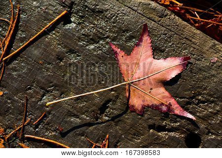 Dry Leaf On A Brown Wooden Background