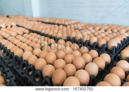 Eggs From Chicken Farm In The Package That Preserved For Sale.