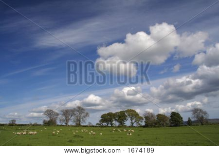 Sheep Field and big skies over rural Northumberland poster