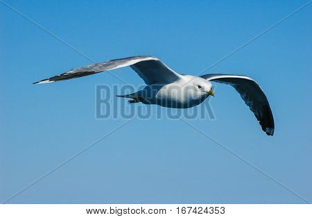 seagull flying on blue sky above of sea