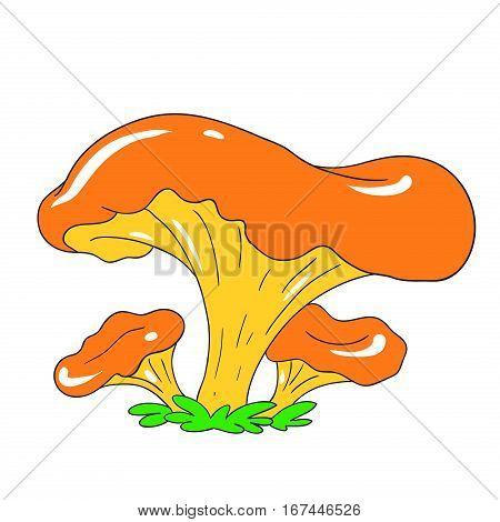 Edible mushroom chanterelle forest. Mycelium Vector Mushroom isolated