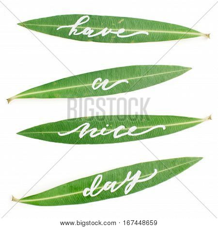 "Calligraphic words ""Have a nice day"" written on green leaves. Flat lay top view"