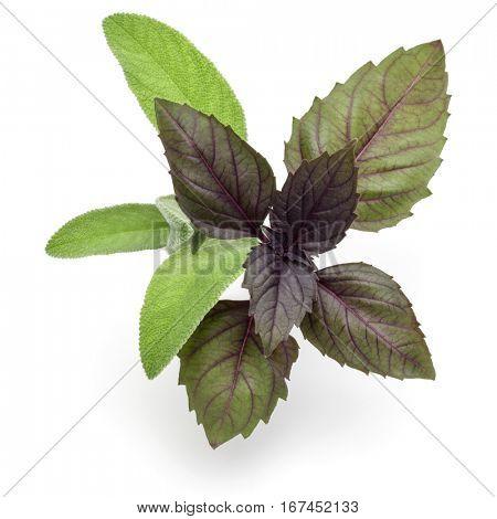 Fresh herb leaves variety isolated on white background. Purple dark opal basil, sage.