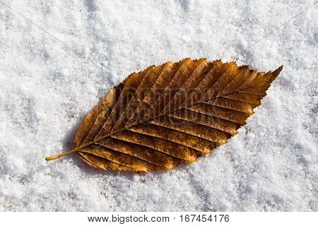 Beautiful dry autumn leaf on a white snowy background