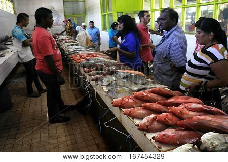Fresh Fish For Sale In Nadi Fish Market Fiji