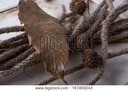 Rope and brown color pod capsule on a dry leaf as an autumn background