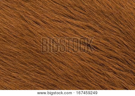 Cow skin in close-up view for background
