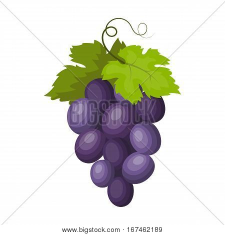 Bunch of wine grapes icon in cartoon design isolated on white background. Spain country symbol stock vector illustration.