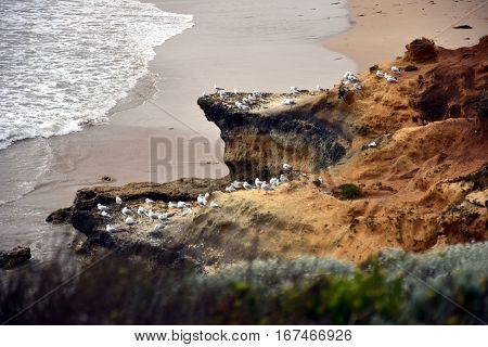 Seagulls stand on the rocks. Seagulls on rocks on the coastline of Great Ocean Road.