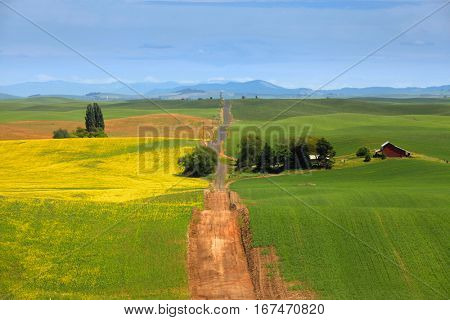 Gravel road through beautiful Palouse landscape
