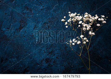 Gypsophila ,baby's-breath Flowers, Light, Airy Masses Of Small White Flowers.