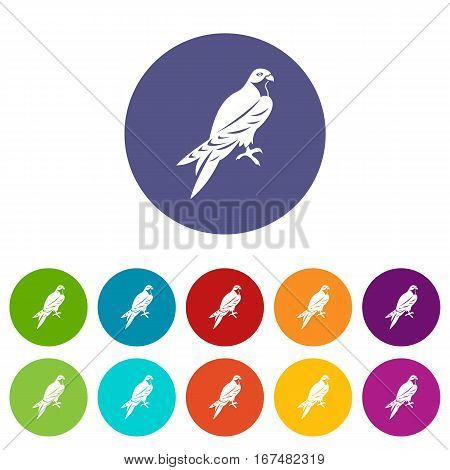 Falcon set icons in different colors isolated on white background