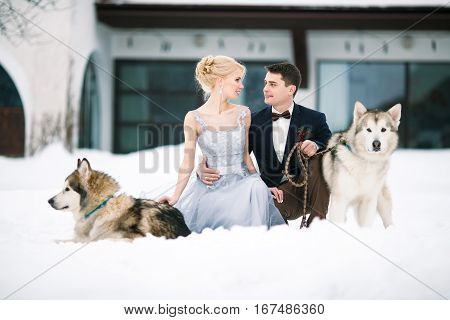Bride and groom in winter with two dogs malamute sitting in snow. Groom hugging bride and they tenderly look against each other.