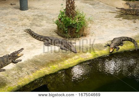 The Thailand crocodile farm and zoo in Patong