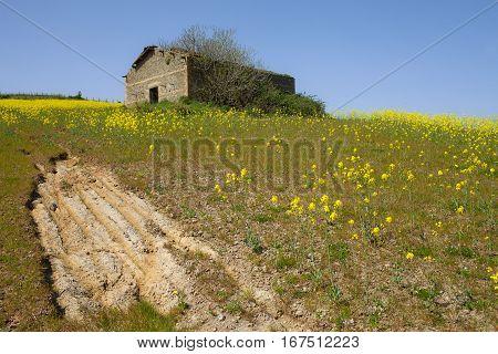 Old Farm In Canola Field