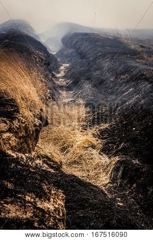 Charred black ground from a grass fire