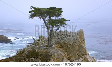 MONTEREY, CALIFORNIA, UNITED STATES - OCT 6, 2014: The Lone Cypress, seen from the 17 Mile Drive, in Pebble Beach, CA USA, along Pacific Coast Highway, scenic view Hwy No 1.