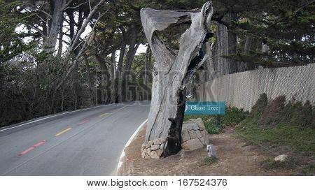 CARMEL, CALIFORNIA, UNITED STATES - OCT 6, 2014: Pescadero Point at 17 Mile Drive, is known as Ghost Tree. It gets, its name from the white gnarly local cypress trees in the area which bring to mind ghosts anything spooky