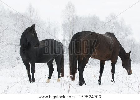 two horses standing on a field in winter