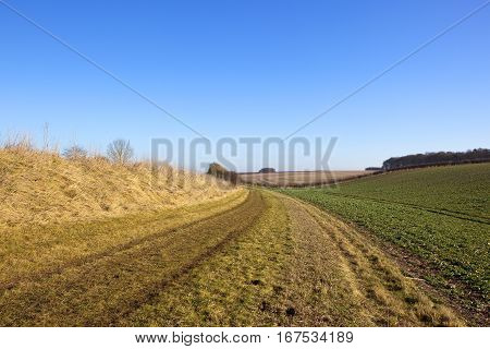 Bridleway And Crops