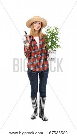 Female florist holding house plant and secateurs isolated on white background
