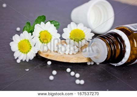globules on wooden spoon with camomile flowers