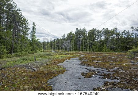 HDR rendition of a bog in Bruce Peninsula Canada. A bog is a wetland that accumulates peat, a deposit of dead plant material often mosses, and in a majority of cases, sphagnum moss.