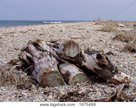 Logs On The Beach
