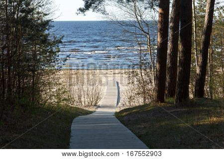 A wooden path leading from a forest to a beach