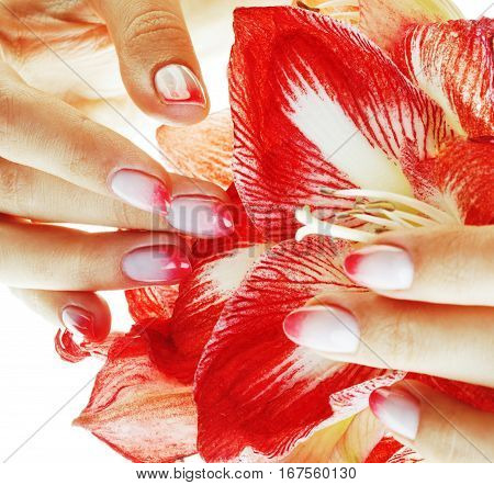 beauty delicate hands with pink Ombre design manicure holding red flower amaryllis close up isolated warm macro real