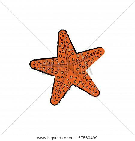 Sea star isolated icon vector illustration graphic design