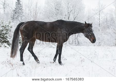 horse standing on a field in winter
