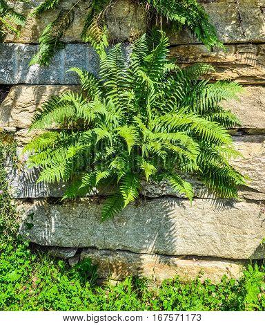 Hdr Green Fern Plant